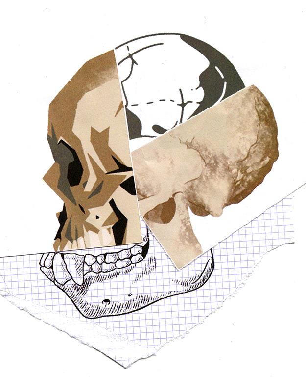 Ilustración tipo collage combinando varios cráneos de humanos y primates